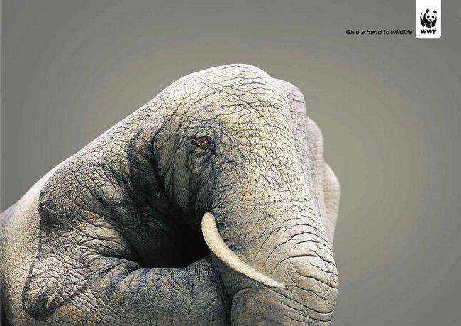 awebic-campanha-publicitaria-animais-43