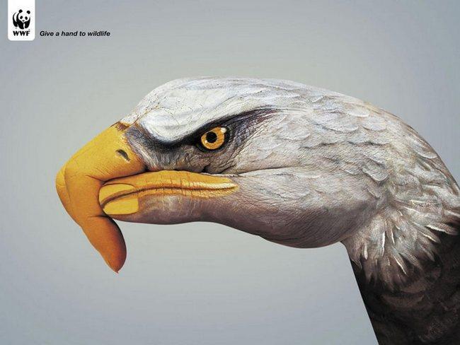 awebic-campanha-publicitaria-animais-44