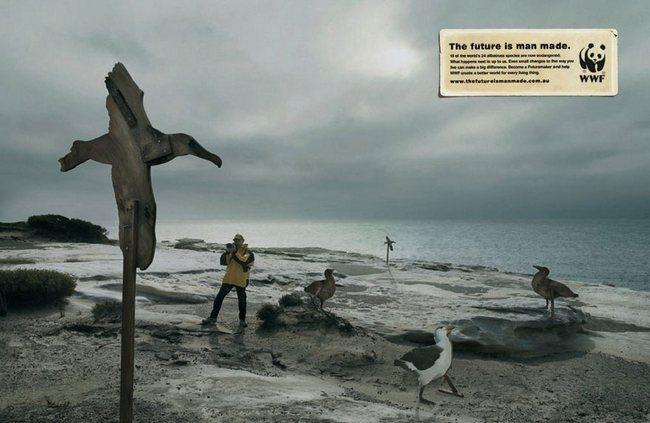awebic-campanha-publicitaria-animais-47