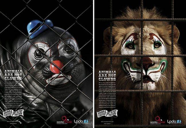 awebic-campanha-publicitaria-animais-5