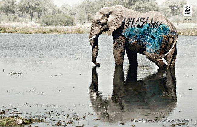 awebic-campanha-publicitaria-animais-51