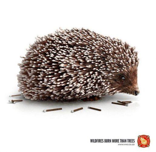 awebic-campanha-publicitaria-animais-54