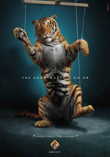 awebic-campanha-publicitaria-animais-56