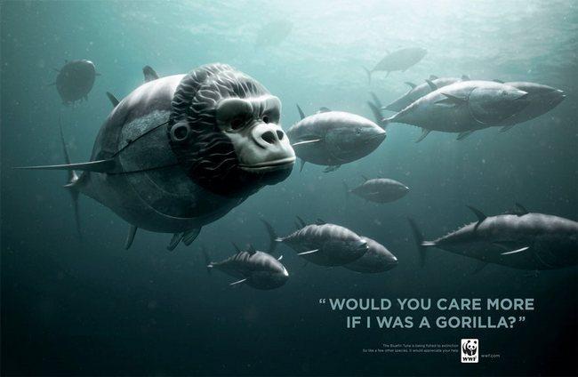 awebic-campanha-publicitaria-animais-63