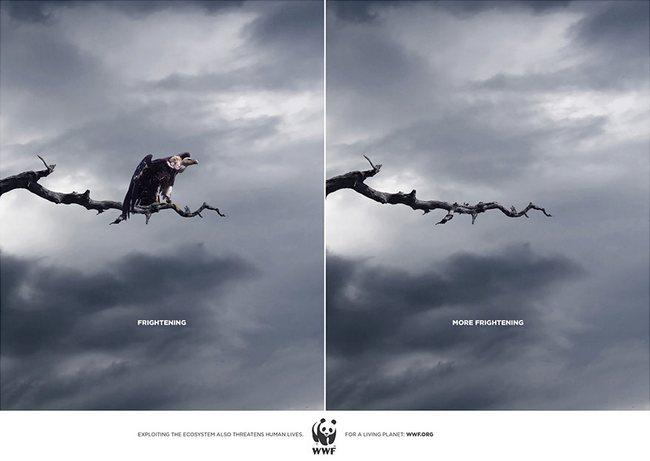 awebic-campanha-publicitaria-animais-9