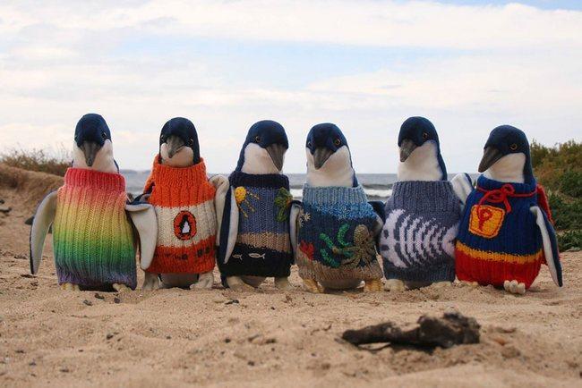 awebic-casaquinhos-pinguins-1