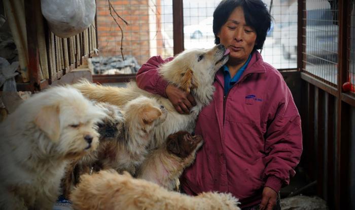 Yang com os cachorros que salvou