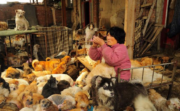 Yang cuida dos animais que resgata, e presta atendimento veterinário como aplicação de vacinas e curativos