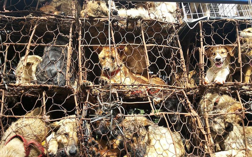 Organizadores do festival e comerciantes de carne são acusados de torturarem os animais