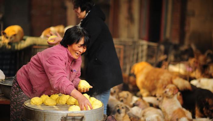 Os pães de milho feitos com carinho para os animais do abrigo