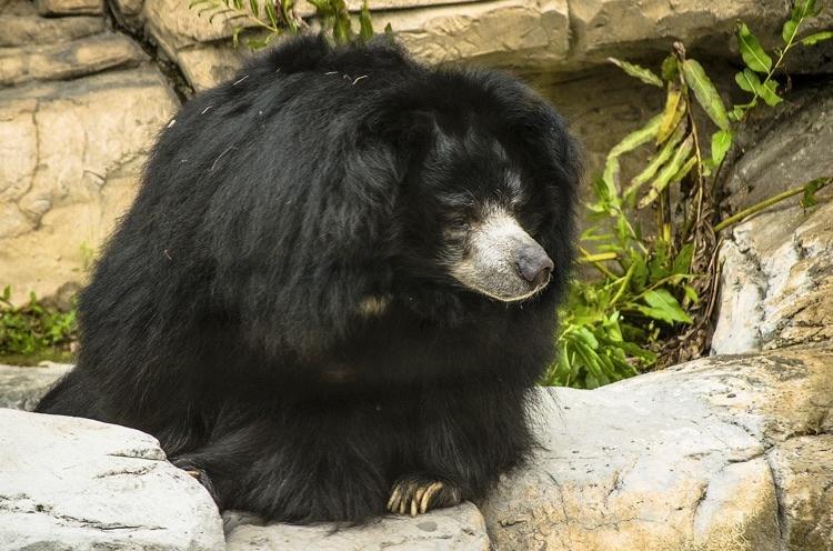 urso.preguiça.1