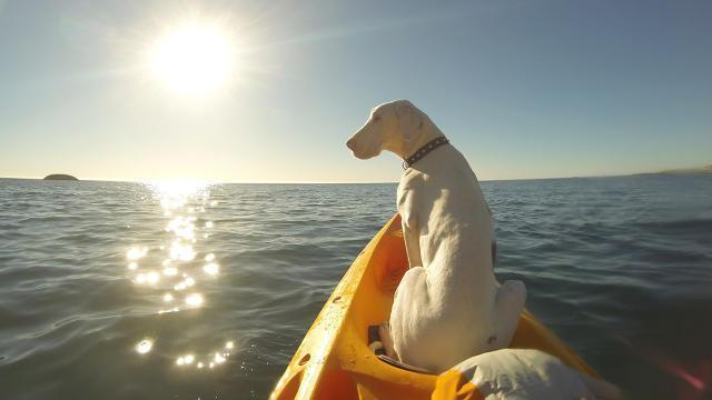 Pegasus-in-Boat