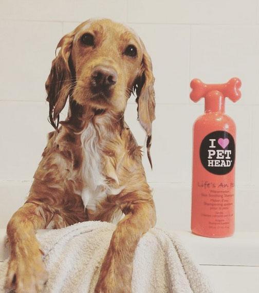 Cães e gatos tomando banho (5)