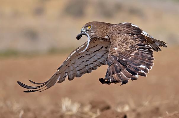 amazing-animal-pictures-11