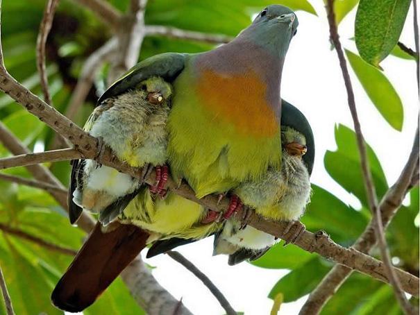 amazing-animal-pictures-17