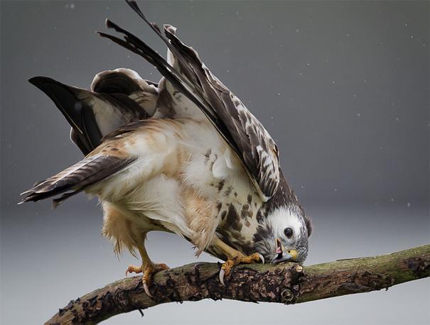 amazing-animal-pictures-2