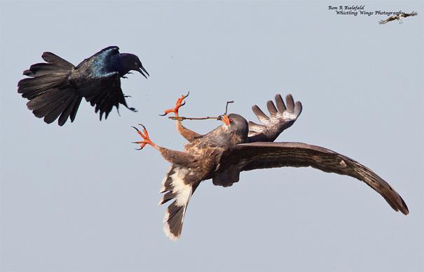 amazing-animal-pictures-25
