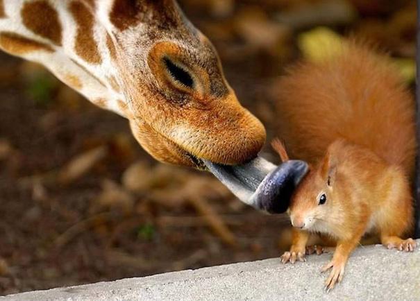 amazing-animal-pictures-29
