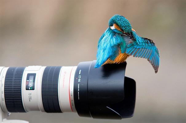 amazing-animal-pictures-3