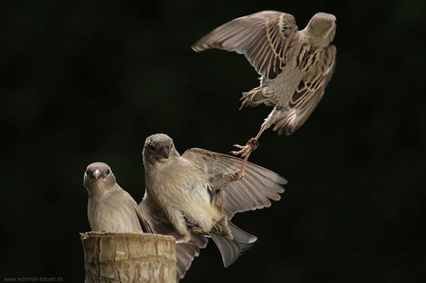 amazing-animal-pictures-33