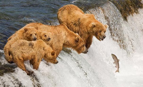 amazing-animal-pictures-37