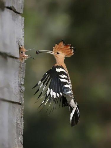 amazing-animal-pictures-38