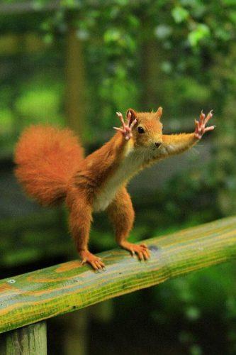 amazing-animal-pictures-39