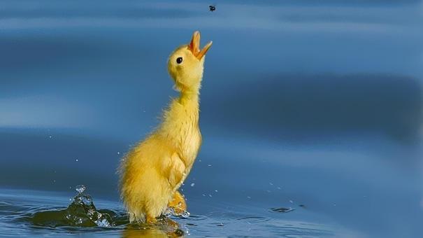 amazing-animal-pictures-40