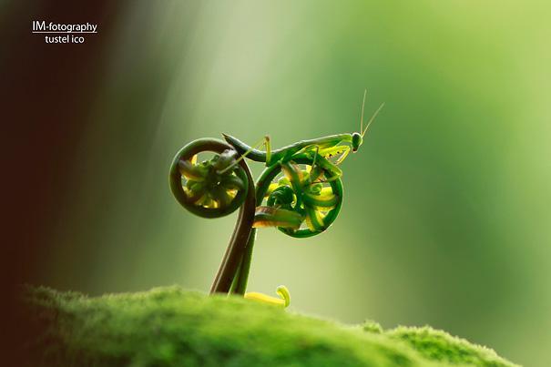 amazing-animal-pictures-49