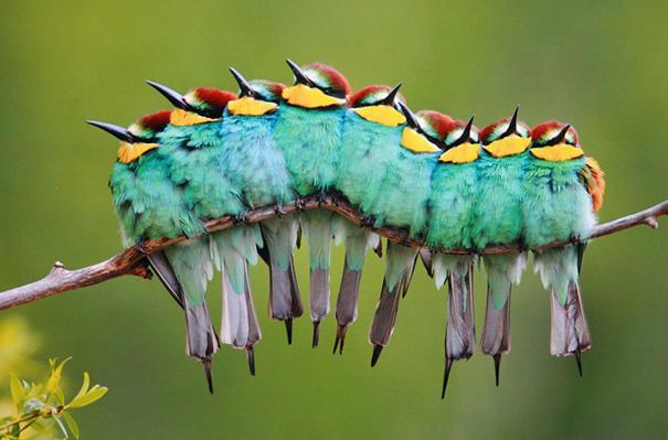 amazing-animal-pictures-50