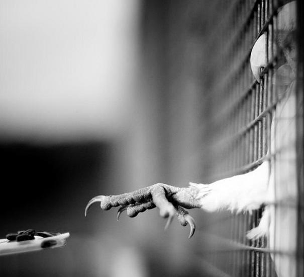amazing-animal-pictures-51