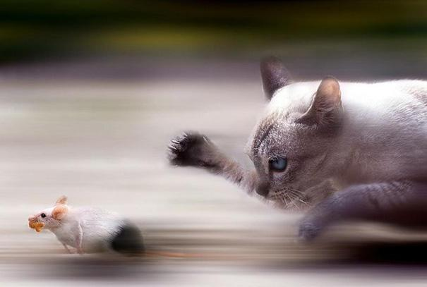 amazing-animal-pictures-52