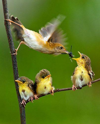 amazing-animal-pictures-6