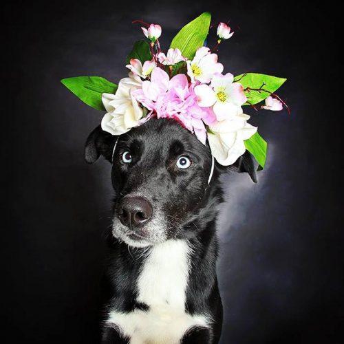 black-dog-portraits-floral-crown-guinnevere-shuster-2