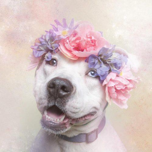dog pitbul
