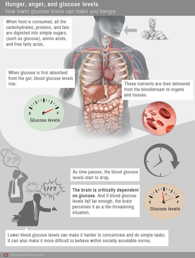 Explicação do sistema digestivo para a fome.