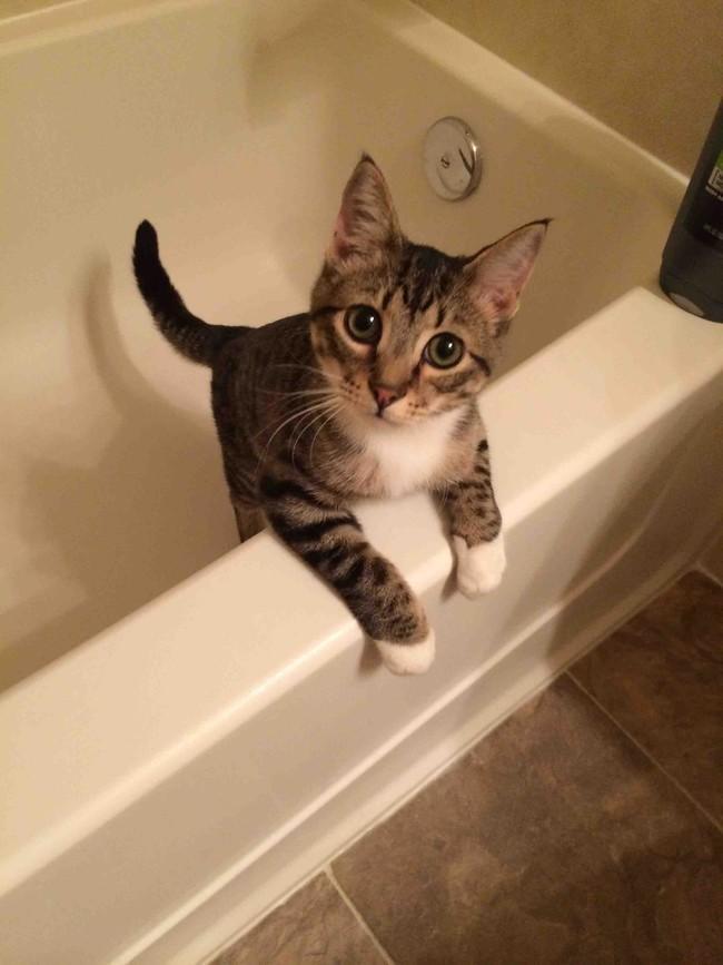 Cães e gatos tomando banho (10)