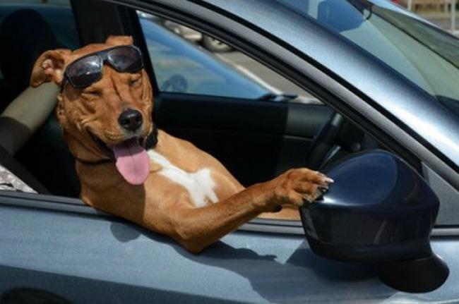 As viagens são muito melhores quando você tem o cara certo do seu lado enquanto dirige. Com esse aí você nem ficaria com sono.