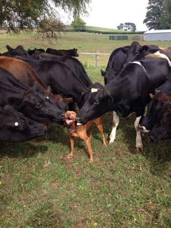 Esse cachorro tem um monte de amigos e ele apenas AMA cada um deles.