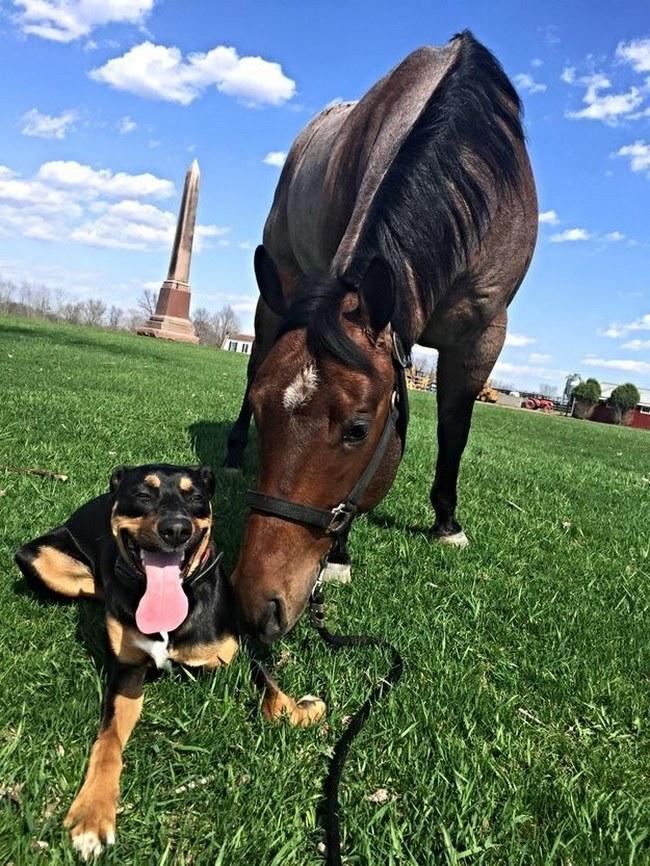 Essa cadela ainda não sabe, mas ela encontrou uma amizade pra vida toda com esse cavalo. Quer dizer, se a gente for ver a calma e a alegria do dog... ela sabe sim.