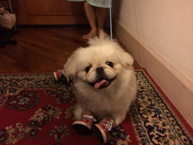 Dê um novo par de tênis para alguém mega-ligado em tendências e você vai ver felicidade genuína. A foto acima mostra como eu tenho razão (até porque o cãozinho ganhou DOIS pares de tênis).