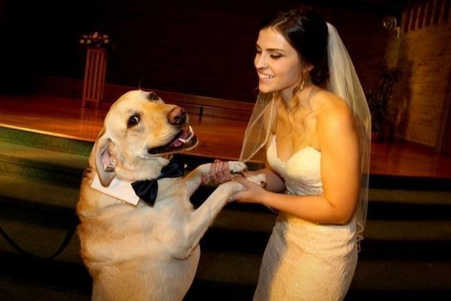 Este cachorro acredita no amor e deseja tudo que há de melhor para os noivos. Quanta ternura!