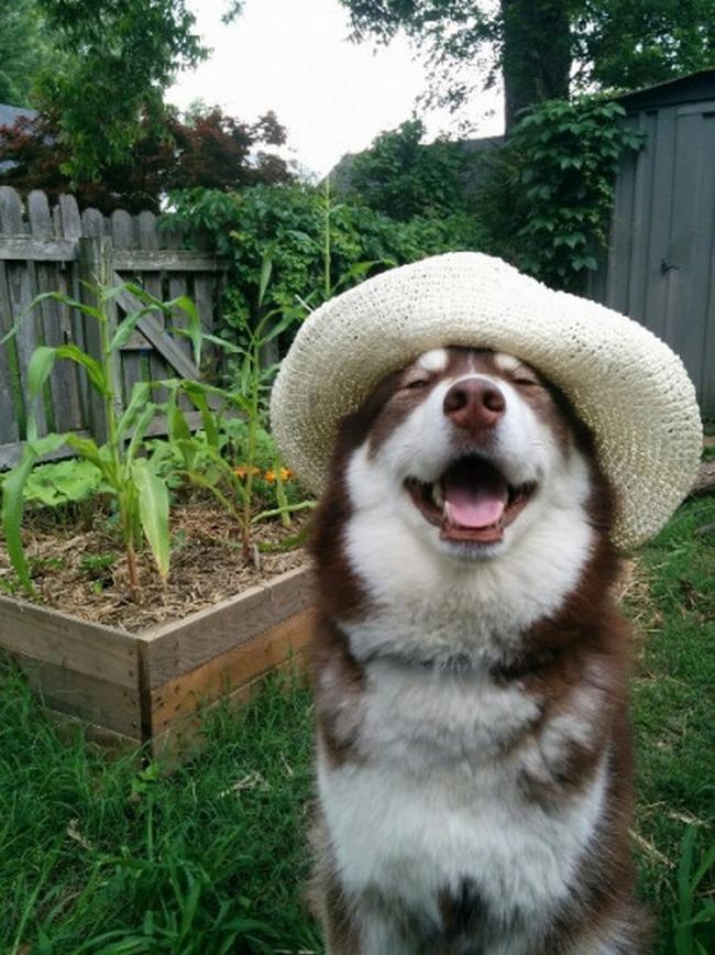Não há nada que dê mais prazer a ele do que cuidar das plantinhas. (Entende-se por: devorar todas elas assim que o papai e a mamãe saírem de casa.)