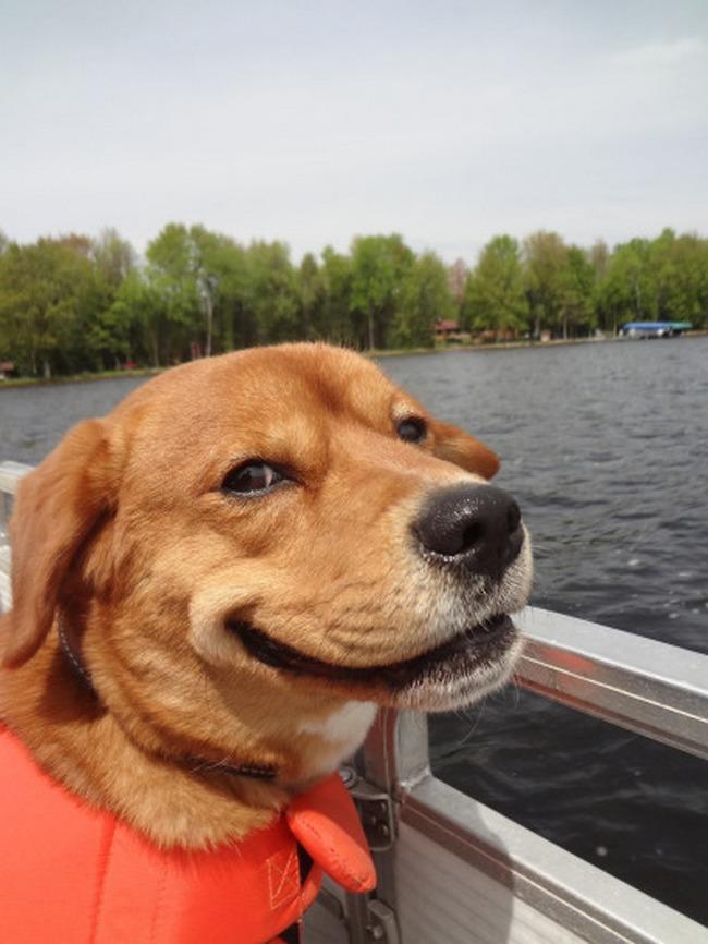 Esse é, sem dúvidas, o sorriso canino mais safado que eu já vi. O que ele pode estar pensando?