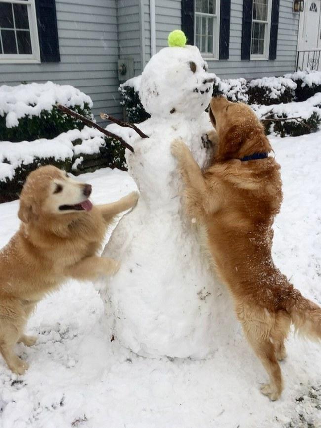 Neve!!! (Ou eles querem a bolinha?)