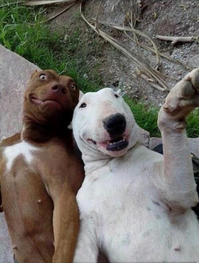 Selfies com os amigos são sempre divertidas. Quando a selfie bomba na internet fica melhor ainda... diz aí se você não lembrou das fotos que você tira com sua melhor amiga(o).