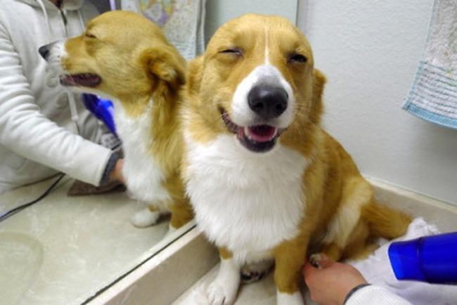 Um cão verdadeiramente feliz é tão tranquilo que até consegue se divertir no veterinário.