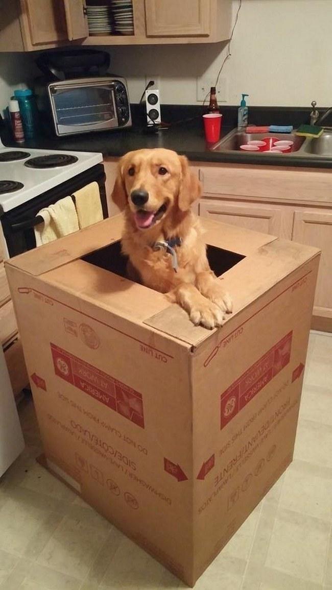 Quem não gostaria de receber uma encomenda como essa? Com um cachorro lindo dentro?! Essa é, com certeza, uma das melhores entregas já feita na história da humanidade.