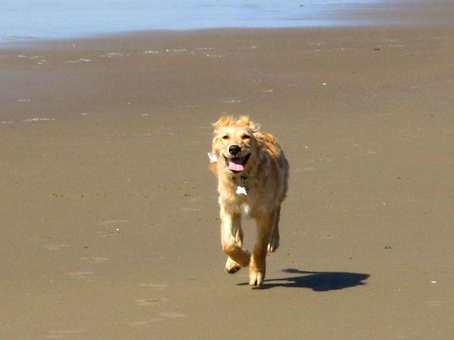 A brisa fresca, a areia fofinha, o tempo bom. Esse é o dia perfeito para pegar uma praia. Adivinha quem vai se divertir hoje?