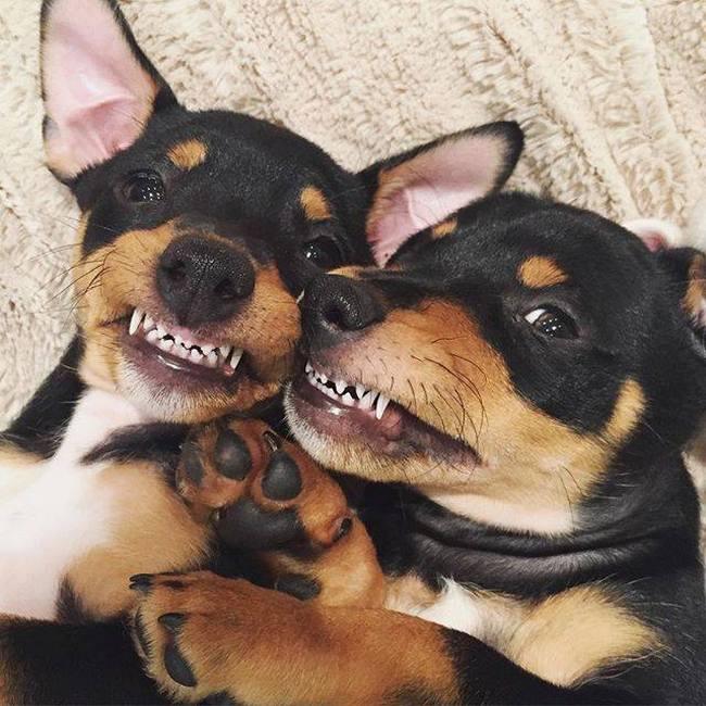 Ué? Quem não gosta de tirar selfies com a namorada(o)?
